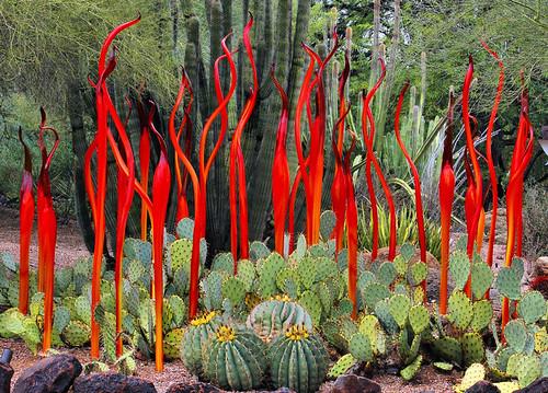 arizona cactus chihuly glass phoenix cacti desert exhibit fabulous dalechihuly desertbotanicalgarden natureselegantshots jhaskellus jhaskell jackhaskell virtualjourney
