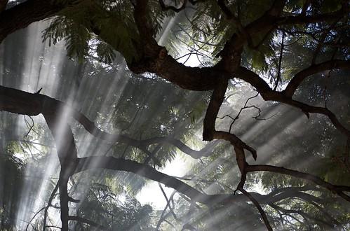Light through the smoke | by blmurch