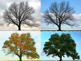 Four Seasons - Longbridge Road | by joiseyshowaa