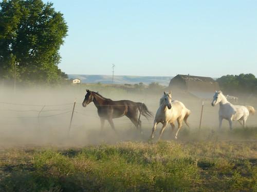sunset horses barn fence country running pasture arabian quarterhorse