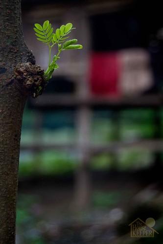 tree nature leaves fun george shoot branch mateo gregorio thehousekeeper pinoykodakero teampilipinas flickristasindios litratistakami georgemateo gregoriomateo gcmateo