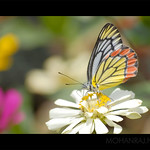 Colours of a Butterfly | ചിത്രശലഭം