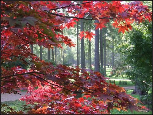 Westonbirt, autumn   by Peter Curbishley
