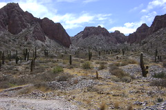 Cacti everywhere - Valley of Humahuaca