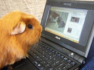 Gethin loves Flickr, 13 Apr 08 | by Castaway in Scotland