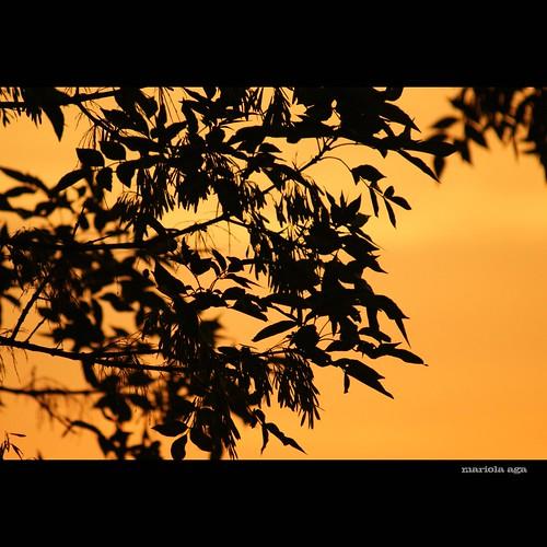 morning sky orange tree silhouette sunrise square glow goldenhour