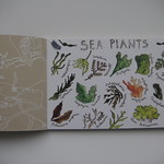 Jennie's sea plants