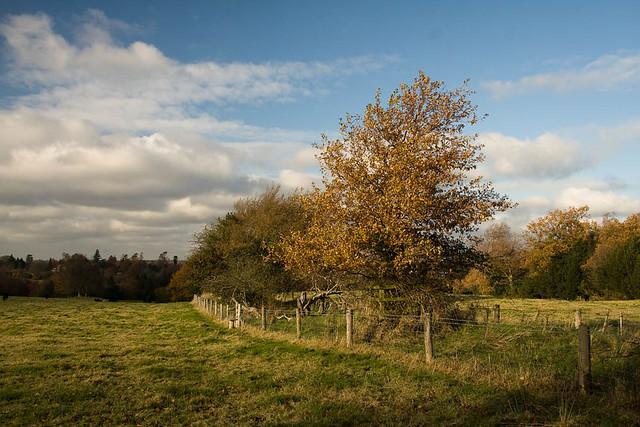 Valewood Farm