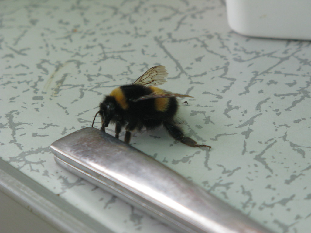Bee visiting for a breakfast