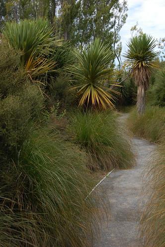 Cesta a palmy