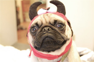 Devil Pug | by K-Bot