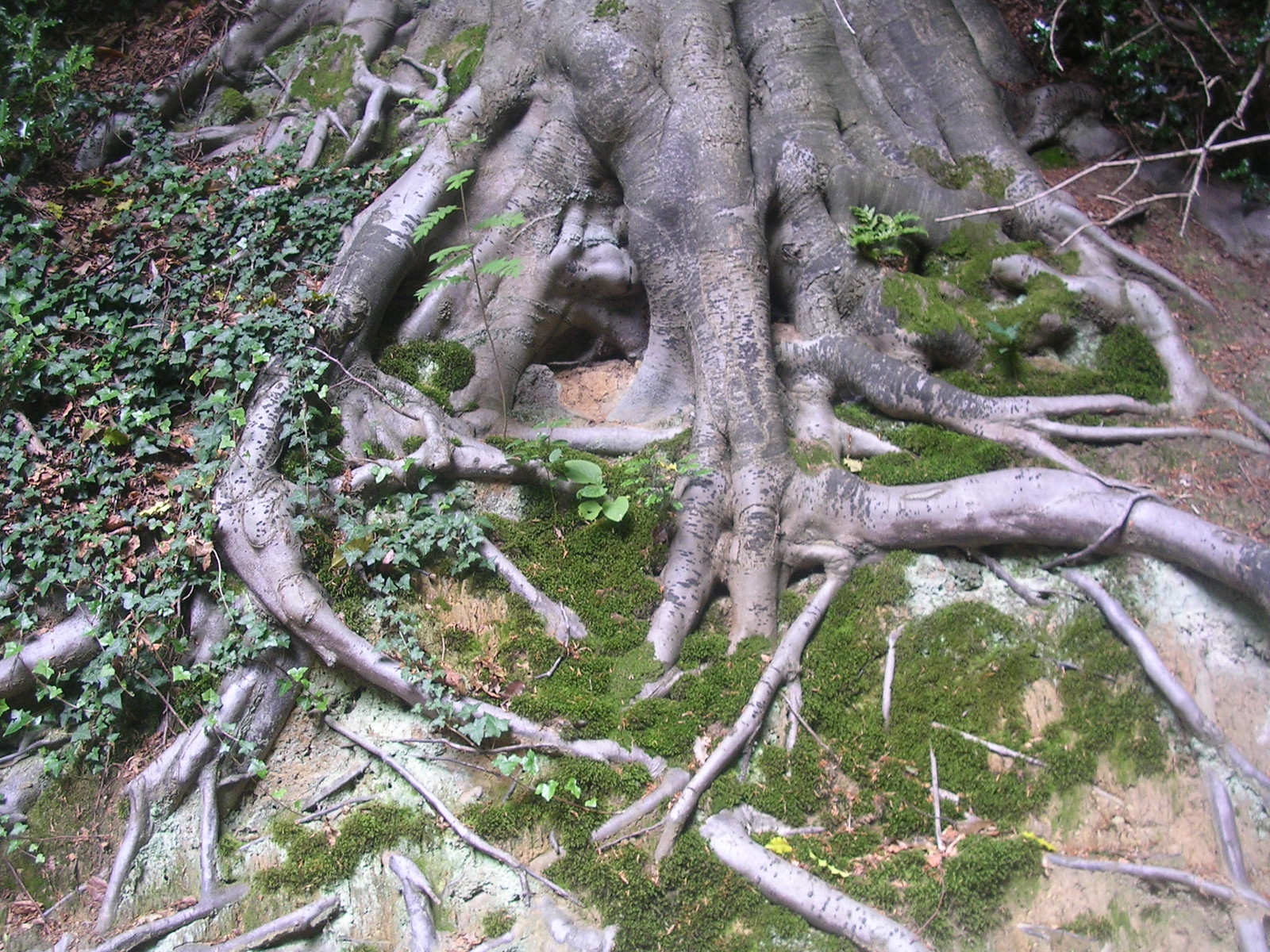 Roots Milford to Godalming