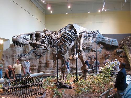 Full skeleton body of T-Rex | by daveynin