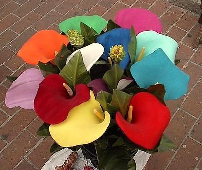 Las Flores Alcatraz Señorita Hirsch Flickr