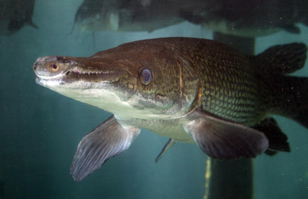 2008-07-25 - Athens, TX - Freshwater Fish Hatchery - 2983