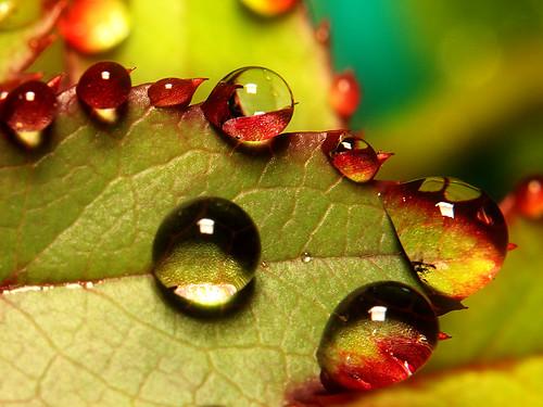 Rose Leaf | by ViaMoi