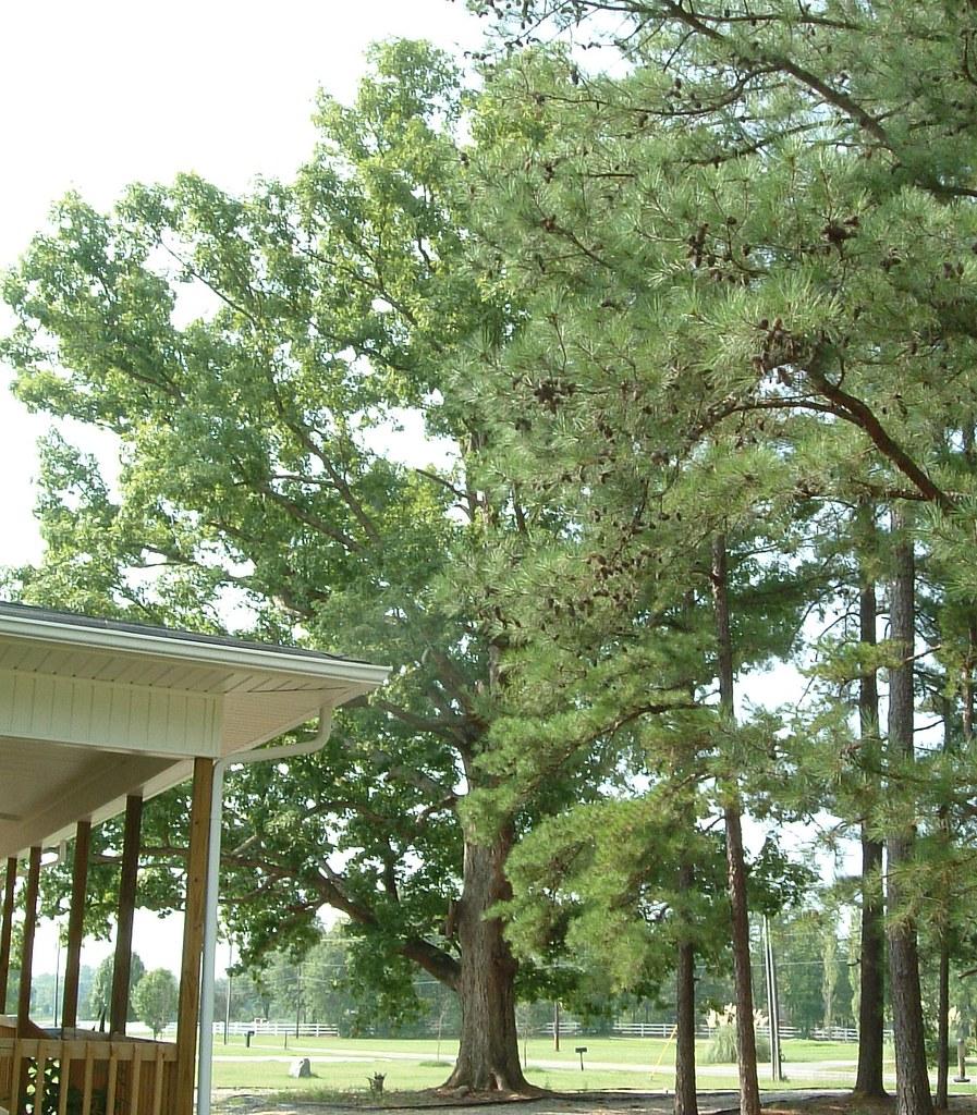 Harmony House 09 - white oak