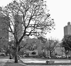 Praça Ouvidor Pardinho, Curitiba-PR