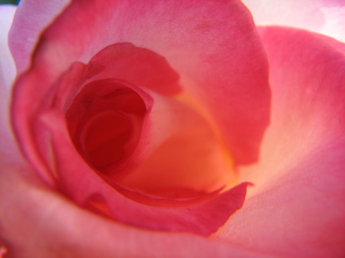 Rose Interior   by audreyjm529