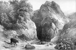 L'ours des montagnes d'Oliferne
