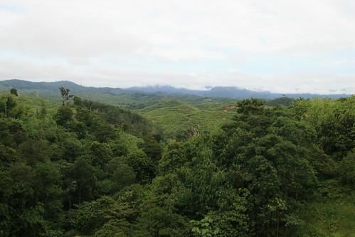 malaysia cameronhighlands