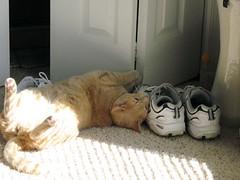 Izzi & Our Sneakers | by smittenkittenorig