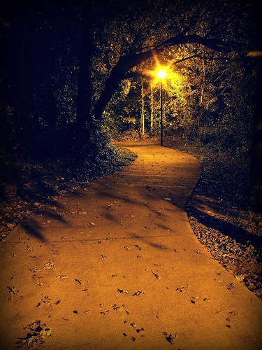 street trees light shadow leaves forest scary woods streetlight pavement path spooky winding avenue pathway frightful enchanting platinumphoto mifnight greeneyephoto