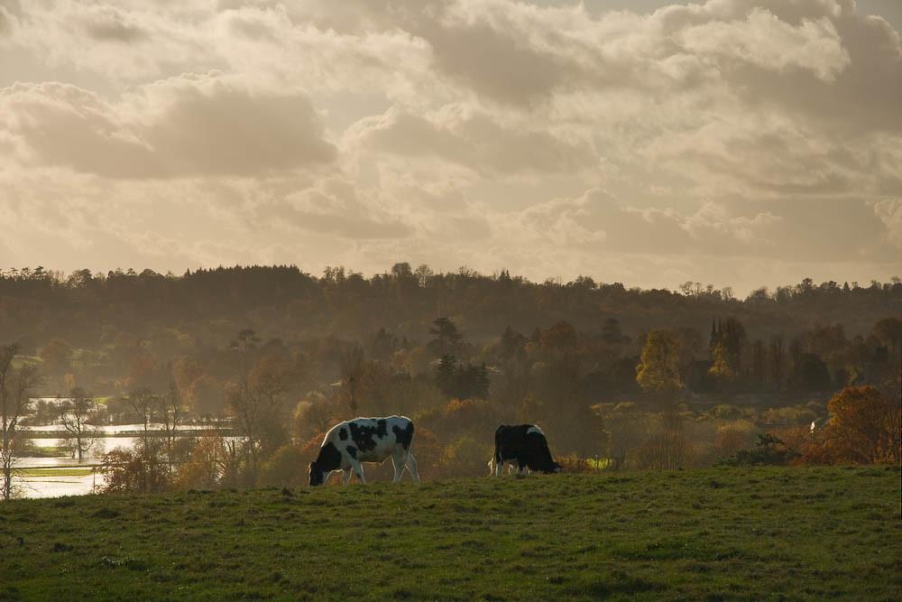 Overlooking Penshurst Place