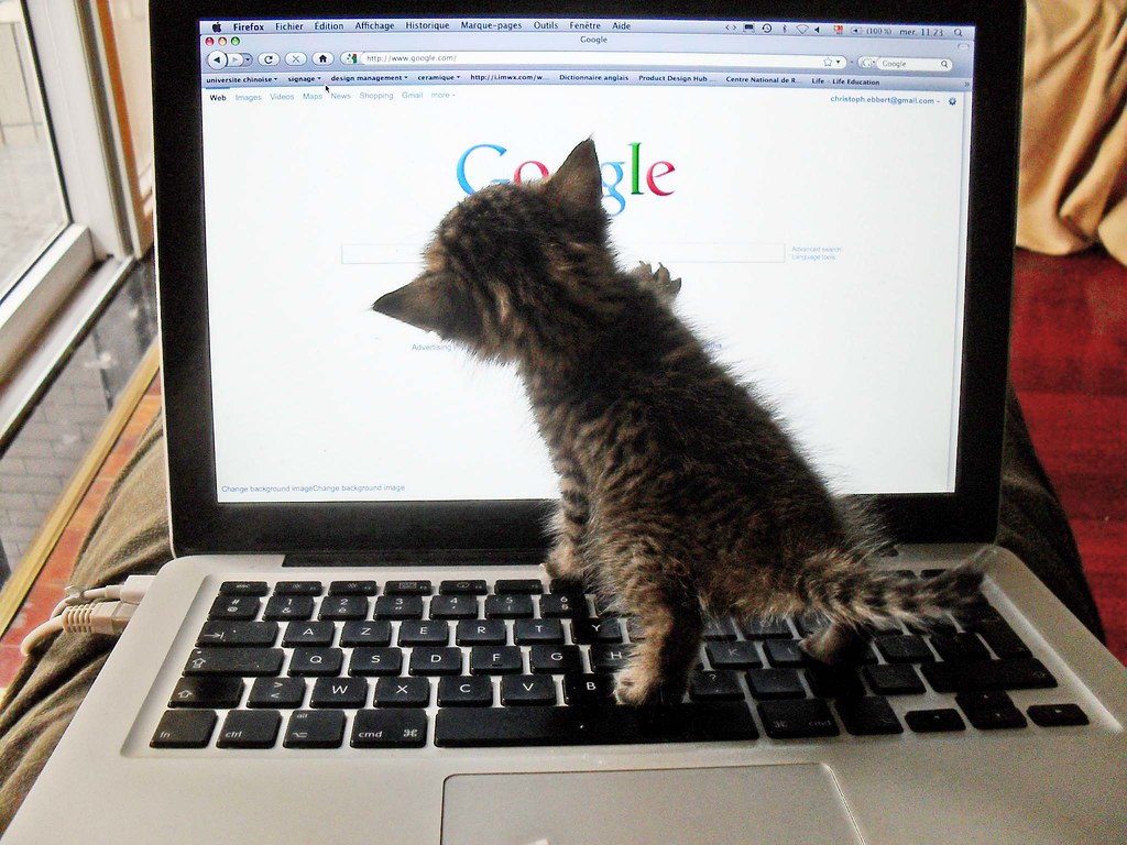 A small gray tabby kitten paws at the Mac laptop screen displaying the Google search home page, with its hind paws standing on the keyboard.