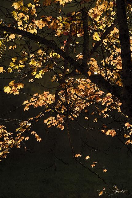 October Treescape-III
