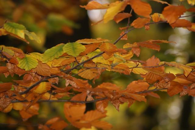 Another glorious autumn shot