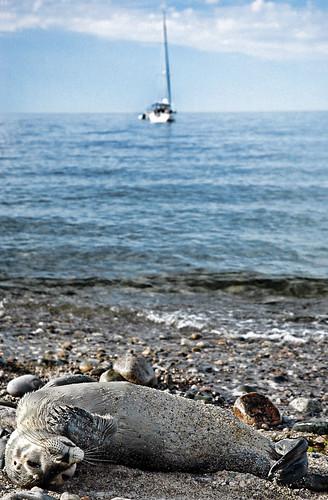 sailboat boat provincetown seal massachusettsbay plymouthmassachusetts manometbeach