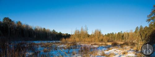 winter snow minnesota sunrise panoramic swamp northern bog spruce