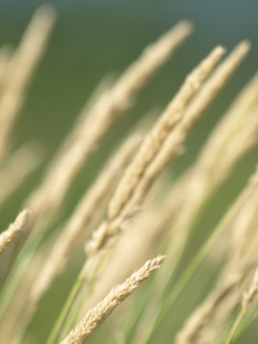 grass minnesota bokeh rochester restoration prairie bigblue hbw sooc