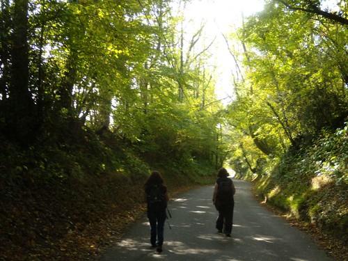 Down a lane 2 Cowden to Eridge