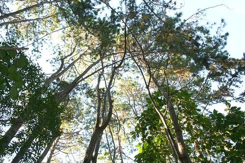 park city trees sunset mountain green nature philippines resort eden tall pk davao pianeta davaocity davaodelsur proudlypinoy pinoykodakero teampilipinas discoveryphotos larawangpinoy tinubdan philippinephotographicsociety joliz