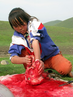 Butchering a sheep Tibetan style near Erbou, Qinghai Province, China | by Robert Thomson