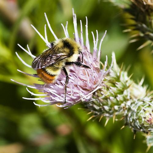 macro nature wildflowers d300 tonygrove