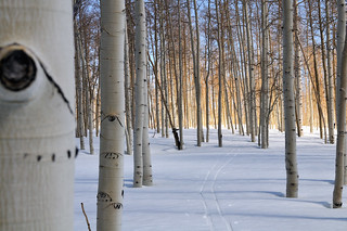 Fairview Canyon Cross Country Skiing - April 19 2008 | by a4gpa
