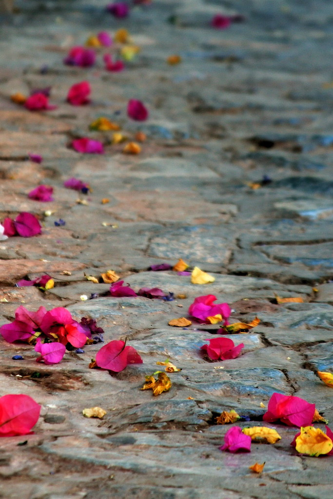 Image result for Petals on paved path