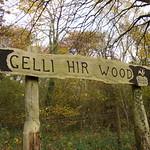 Gelli Hir wood
