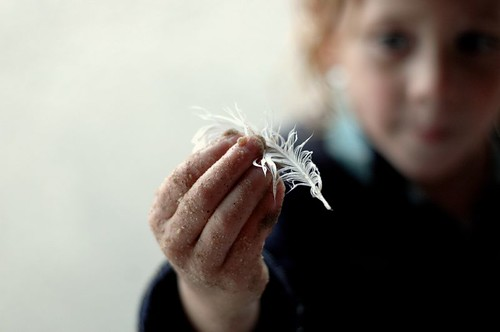 feather | by Jodimichelle
