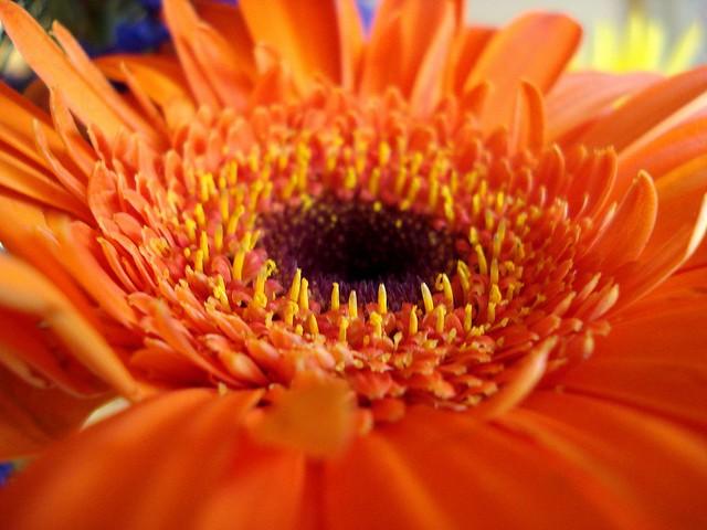 Orange plant from the boquet
