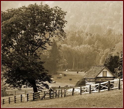 Ash Lawn - Highland (Sepia)   by Tony Fischer Photography