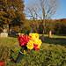 Oakwood Cemetery - Troy, NY - 23