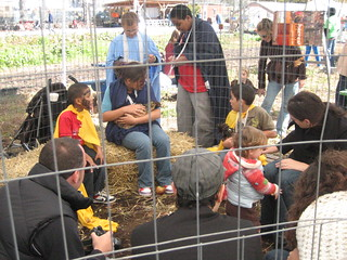 Petting Chickens at Red Hook Community Farm Harvest Festival | by germuska
