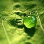 green droplet