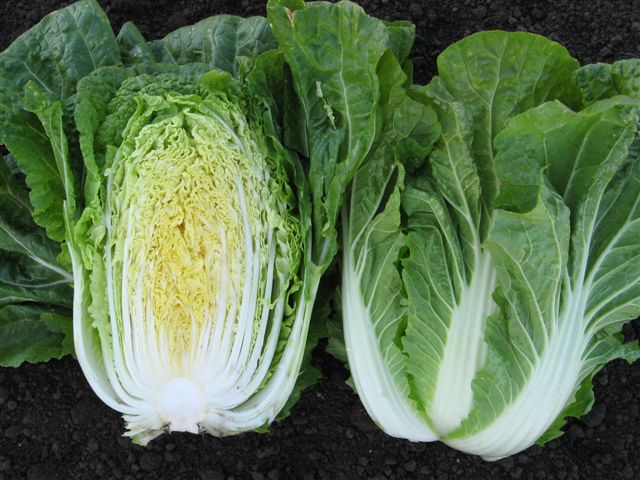 waltz cut | Growing Food From Scraps | Kitchen Scraps You Can Regrow |regrrow vegetables