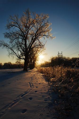 trees winter sunset snow ice silhouette iowa