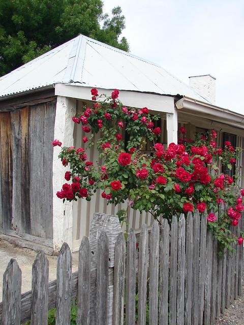 Old rose cottage, South Australia